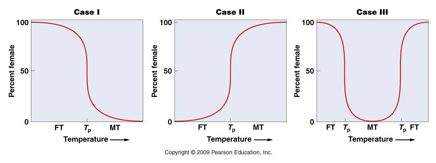 Temperature Sex Determination 121